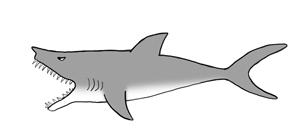 AV_gevaar-haai150dpi